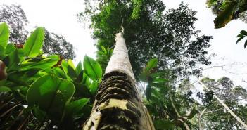 COP21: les pays pollueurs dans le viseur du Congo