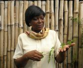 "GIE MORINGA CONGO Marguerite Homb son ""l'arbre miracle"""