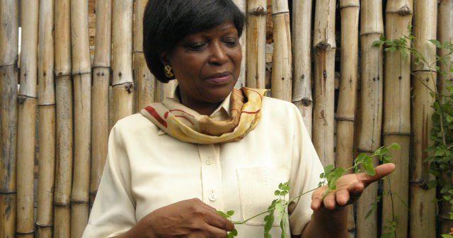 "GIE MORINGA CONGO Marguerite Homb son ""l'arbre miracle"""
